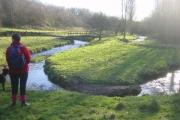 Meander in River Medlock