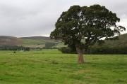 Westwards towards Daleigh Farm.