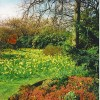 Spring in Duthie Park
