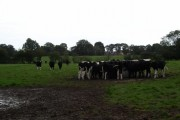 Farmland near Denmead