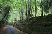 The Road through Hooksburry Wood