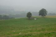 Sheep grazing, Kiltrochan