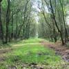 Woodland path through Farley Moor Wood