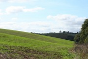 Shobrooke: new crop