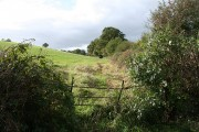 Kennerleigh: fence and hedge