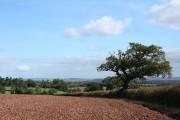 Shobrooke: ploughed field