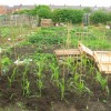 Allotment behind front street Perkinsville