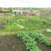 Allotment sheds Perkinsville
