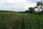 fields above Ridley Gill