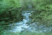 Confluence of river Giedd & Nant Cyw