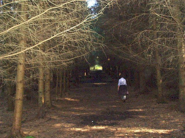 A walk in the Big Wood