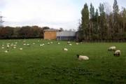 Springwood Farm