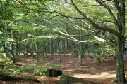 Woodland on Otley Chevin