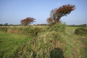 Hawthorn and Gorse Hedgerows