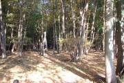 Hangman Coppice, Hatfield Forest