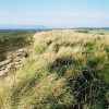 Shoreline beside Struie Golf Course