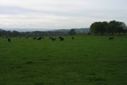 Farmland near Shildon