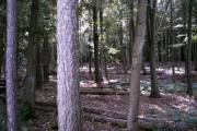 Howe Wood