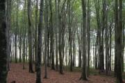Boringdon Park Wood