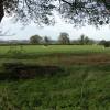 Cattle grazing near Upper Barton End