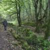 Cressbrook Dale, Wood.