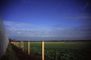 Fenland fields