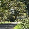 East Worlington: approaching Drayford