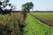 Neat Marsh, Preston