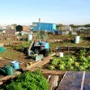 Palmerston Allotments, Barry