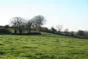 Rose Ash: near Bickwill