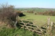 Rose Ash: on Burcombe Moor