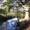 River Wey near Hankley Farm