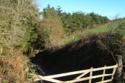 Track into Butland Wood