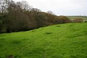 Pasture and Woodland