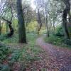 Local woods , Bonhill