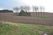 Farmland near Thorpe Bulmer Farm, Hart