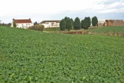 Thorpe Bulmer Farm, Hart