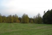 Murthly Castle parkland.