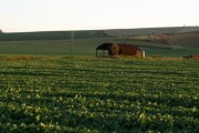 Farmland near Conock