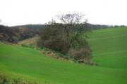 Hampole Woods
