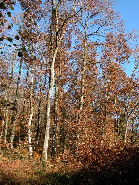 Autumn colours in Hollocombe