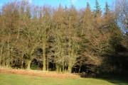 Heathercombe woods