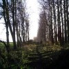 Old Railway line Morton, now used as a footpath