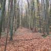 Bookham Wood