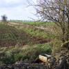 A Cotswolds field edge