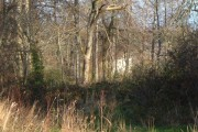 Berryhead Plantation