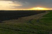 Farmland, Steventon