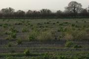 Farmland, West Hendred