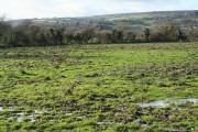 Musbury: in the Axe valley