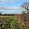 Musbury: near Millands Farm